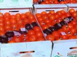 Фрукты и овощи из испании - фото 3