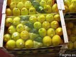 Фрукты и овощи из испании - фото 4