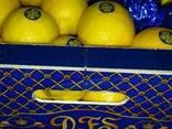 """Лимон """"Primofiori"""" с Испании - фото 2"""