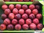 Персики и нектарины оптом из Испании - фото 2