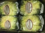 Продаем капусту - фото 2