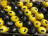 Продаем лимон 2014 - фото 2