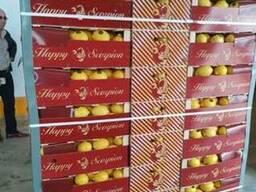 Продаем лимоны - фото 2