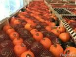 Продаем мандарины