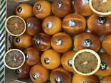 Продаем сангинели из Испании - фото 5