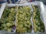 Продаем виноград - фото 3