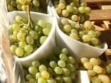 Продаем виноград - фото 4