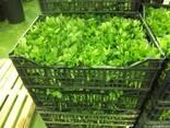 Продаем зелень из Испании - фото 1