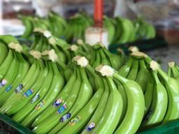 Бананы. Прямые поставки из Эквадора банана Кавендиш.