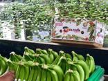 Бананы. Прямые поставки из Эквадора банана Кавендиш. - photo 3