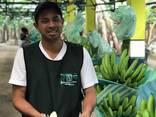 Бананы. Прямые поставки из Эквадора банана Кавендиш. - photo 5