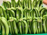 Бананы. Прямые поставки из Эквадора банана Кавендиш. - photo 8