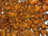 Cow ox gallstone for sale - фото 1