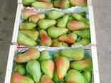 Груши и яблоки Гренни Смит из Испании . Прямые поставки . - фото 1