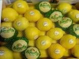 Испанские фрукты. Прямые поставки. - фото 9