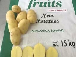 Картофель молодой нового урожая из Испании. Прямые поставки.