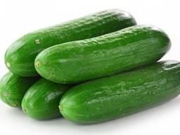 Pepino mini. Mini Cucumbers. Мини огурец.