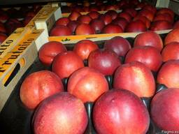 Нектарины и персики из Испании. Прямые поставки.