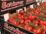 Ecoinver - Испанский Производитель Экспортер свежих овощей - фото 4