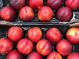 Предлагаем оптовые поставки нектаринов из Испании.