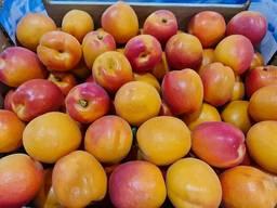 Предлагаем оптовые поставки абрикосов из Испании.