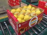 Продаем лимон - фото 3
