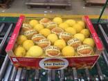 Продаем лимон - фото 2
