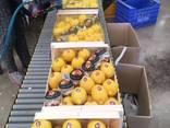 Продаем лимон - фото 5