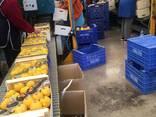 Продаем лимон - фото 11