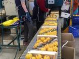 Продаем лимон - фото 12
