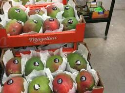 Продаем манго из Испании - фото 5