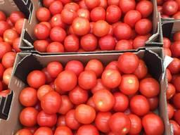 Предлагаем оптовые поставки томатов разных сортов из Испании