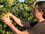 Сбор фруктов - photo 1