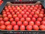 Ecoinver - Испанский Производитель Экспортер свежих овощей - фото 3