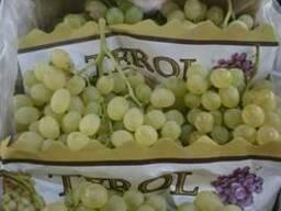 Виноград - фото 4