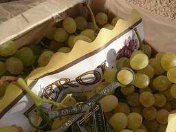 Предлагаем оптовые поставки винограда из Испании