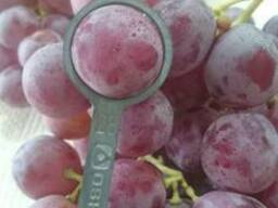 Виноград из Чили. Прямые поcтавки.